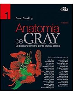 Anatomia del Gray. I fondamenti - Drake Vogl